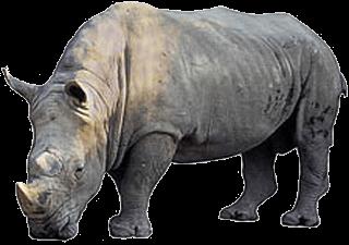 noshörning på engelska